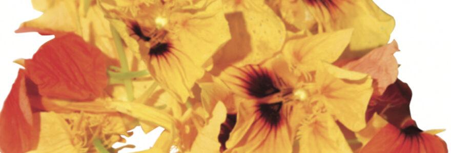 graines florales